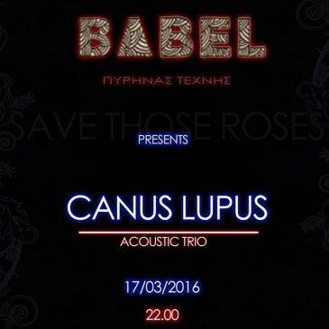 Live «Canus Lupus acoustic trio»
